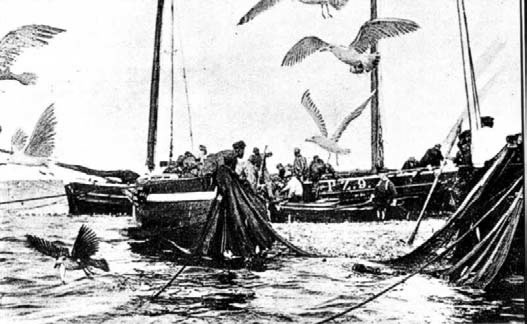 Tucking the Pilchards at Sennen 4 (picture c1880)